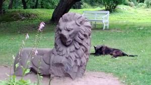 Kulkukoira vahtii nenänsä menettänyttä Suomen Leijonaa  Monrepos´n puistossa.