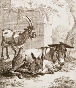 Johann Heinrich Roos (1631 - 1685), Pukki ja aasintamma