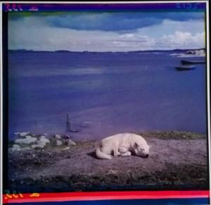 Laika-koira ottaa rennosti 1915