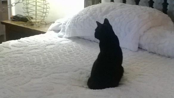 Kissa Hemingwayn sängyllä.