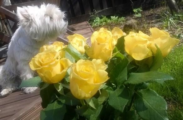 Ruusu kaikille äideille!