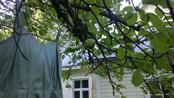 Häämekko tuulettui omenapuun oksalla.